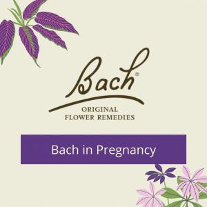Bach in Pregnancy